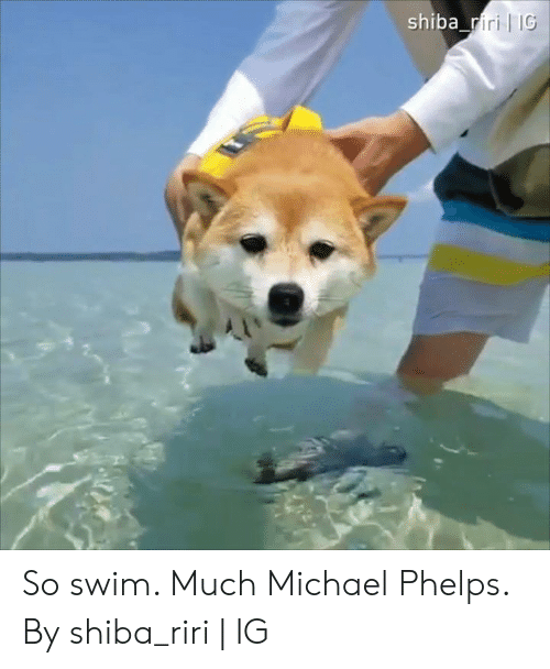 Dank, Michael, and Michael Phelps: shiba_riri IG So swim. Much Michael Phelps.  By shiba_riri | IG