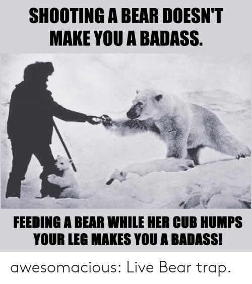 trap: SHOOTING A BEAR DOESN'T  MAKE YOU A BADASS.  FEEDING A BEAR WHILE HER CUB HUMPS  YOUR LEG MAKES YOU A BADASS! awesomacious:  Live Bear trap.