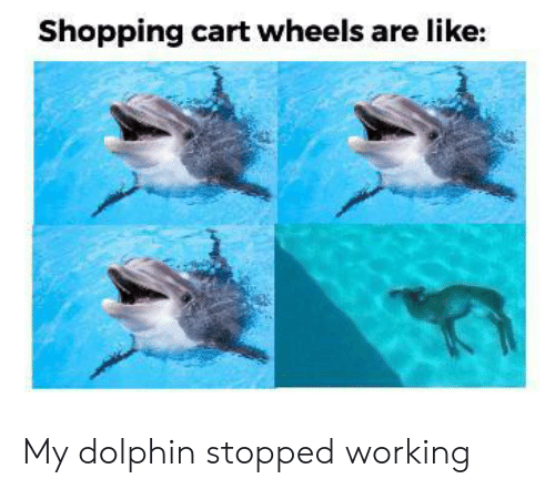 Shopping, Dolphin, and Working: Shopping cart wheels are like: My dolphin stopped working
