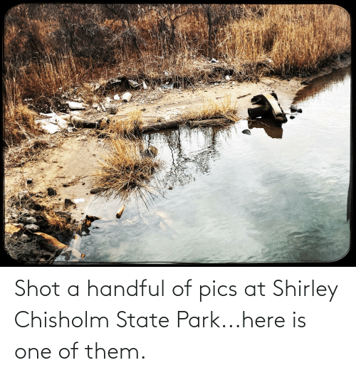 shirley chisholm: Shot a handful of pics at Shirley Chisholm State Park...here is one of them.
