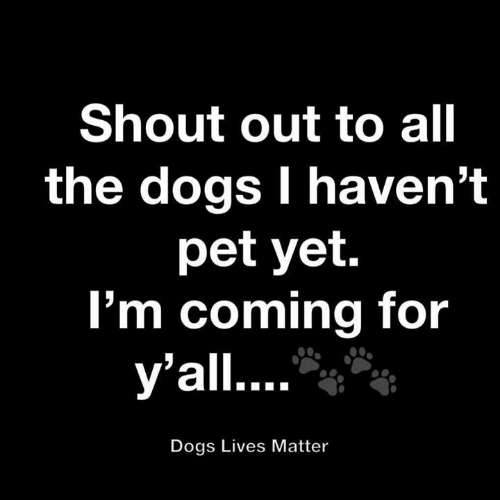 Lives Matter: Shout out to all  the dogs I haven't  pet yet.  I'm coming for  y'all....  Dogs Lives Matter
