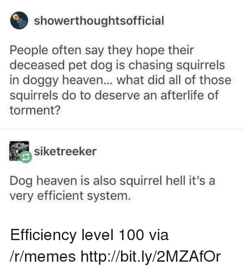 efficient: showerthoughtsofficial  People often say they hope their  deceased pet dog is chasing squirrels  in doggy heaven... what did all of those  squirrels do to deserve an afterlife of  torment?  siketreeker  Dog heaven is also squirrel hell it's a  very efficient system. Efficiency level 100 via /r/memes http://bit.ly/2MZAfOr
