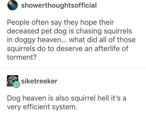 efficient: showerthoughtsofficial  People often say they hope their  deceased pet dog is chasing squirrels  in doggy heaven... what did all of those  squirrels do to deserve an afterlife of  torment?  siketreeker  Dog heaven is also squirrel hell it's a  very efficient system