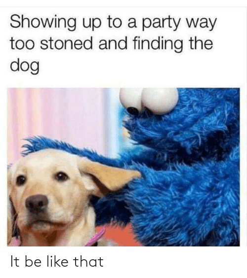 Finding: Showing up to a party way  too stoned and finding the  dog It be like that