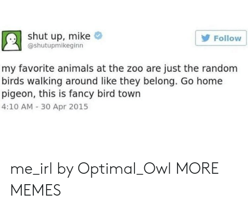 optimal: shut up, mike  Follow  @shutupmikeginn  my favorite animals at the zoo are just the random  birds walking around like they belong. Go home  pigeon, this is fancy bird town  4:10 AM -30 Apr 2015 me_irl by Optimal_Owl MORE MEMES
