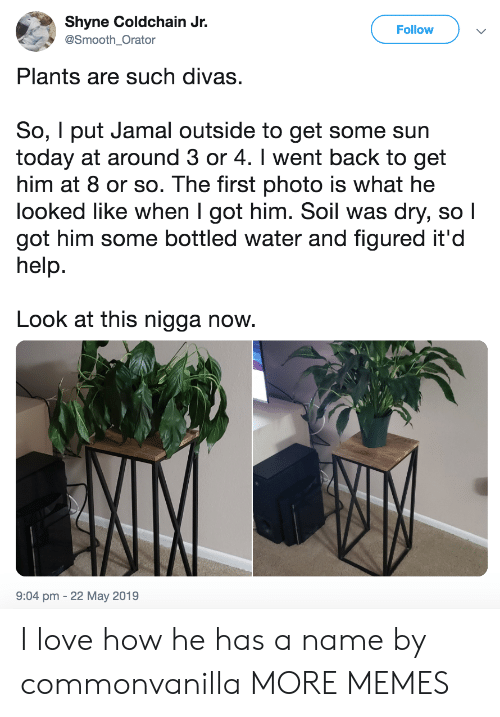 soil: Shyne Coldchain Jr.  Follow  @Smooth Orator  Plants are such divas.  So, I put Jamal outside to get some sun  today at around 3 or 4. I went back to get  him at 8 or so. The first photo is what he  looked like when I got him. Soil was dry, so l  got him some bottled water and figured it'd  help.  Look at this nigga now.  9:04 pm -22 May 2019 I love how he has a name by commonvanilla MORE MEMES