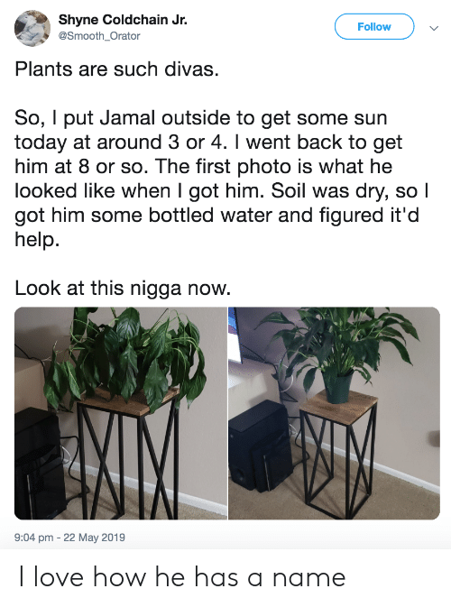 soil: Shyne Coldchain Jr.  Follow  @Smooth_Orator  Plants are such divas.  So, I put Jamal outside to get some sun  today at around 3 or 4. I went back to get  him at 8 or so. The first photo is what he  looked like when I got him. Soil was dry, so I  got him some bottled water and figured it'd  help.  Look at this nigga now.  9:04 pm -22 May 2019 I love how he has a name