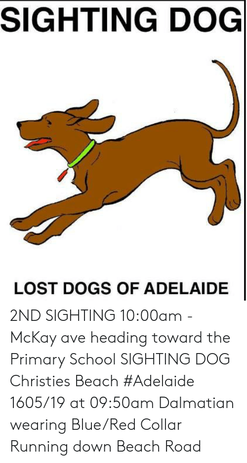 Dogs, Memes, and School: SIGHTING DOG  LOST DOGS OF ADELAIDE 2ND SIGHTING 10:00am - McKay ave heading toward the Primary School   SIGHTING DOG Christies Beach #Adelaide 1605/19 at 09:50am Dalmatian wearing Blue/Red Collar Running down Beach Road