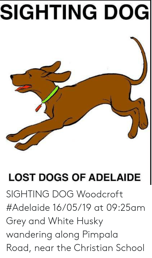Dogs, Memes, and School: SIGHTING DOG  LOST DOGS OF ADELAIDE SIGHTING DOG Woodcroft #Adelaide 16/05/19 at 09:25am Grey and White Husky wandering along Pimpala Road, near the Christian School