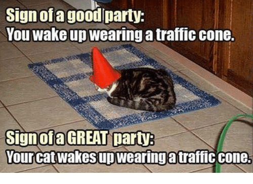 Dank, 🤖, and Signs: Sign of a goodlparty:  You wake up  wearing a traffic cone.  Sign of a GREAT party  Your catwakesupwearingatraffic cone.