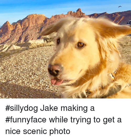 Sillydog: #sillydog Jake making a #funnyface while trying to get a nice scenic photo