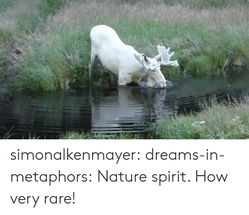 Tumblr, Blog, and Nature: simonalkenmayer:  dreams-in-metaphors: Nature spirit.  How very rare!