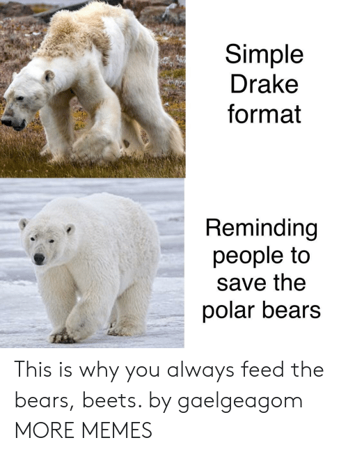 polar bears: Simple  Drake  format  Reminding  people to  save the  polar bears This is why you always feed the bears, beets. by gaelgeagom MORE MEMES