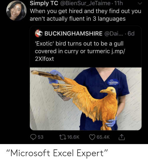 """dai: Simply TC @BienSur_JeTaime 11h  When you get hired and they find out you  aren't actually fluent in 3 languages  BUCKINGHAMSHIRE @Dai... 6d  'Exotic' bird turns out to be a gull  covered in curry or turmeric j.mp/  2Xlfoxt  Tiggyawinkdes  Wildlife Nune  L16.6K  53  65.4K """"Microsoft Excel Expert"""""""