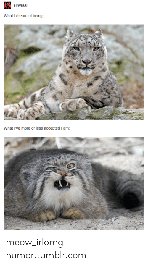 Omg, Tumblr, and Http: sinvraal  What I dream of being  What I've more or less accepted I am; meow_irlomg-humor.tumblr.com