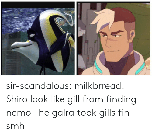 Shiro: sir-scandalous: milkbrread:  Shiro look like gill from finding nemo  The galra took gills fin smh