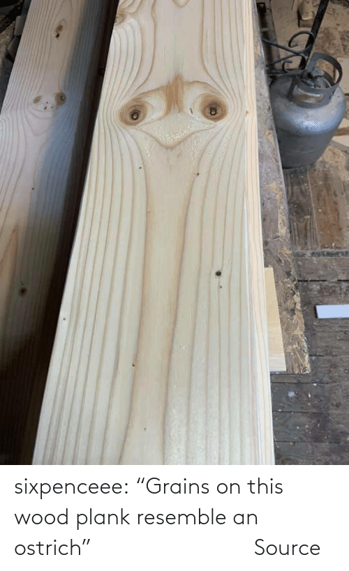 """ostrich: sixpenceee:   """"Grains on this wood plank resemble an ostrich""""                Source"""
