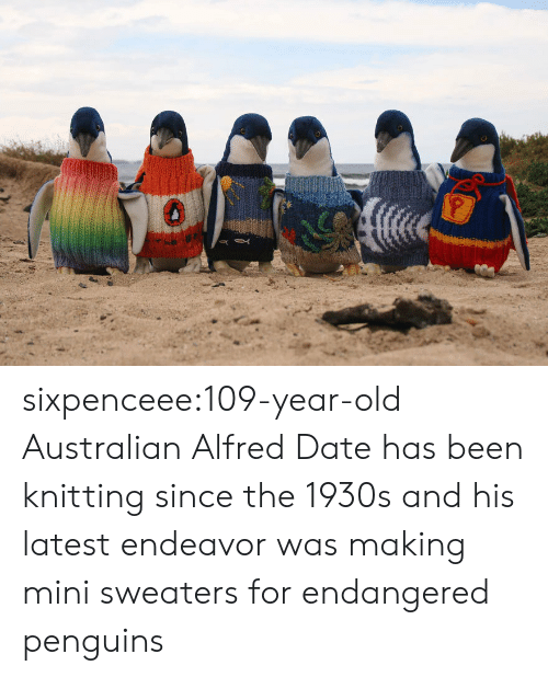 sweaters: sixpenceee:109-year-old Australian Alfred Date has been knitting since the 1930s and his latest endeavor was making mini sweaters for endangered penguins