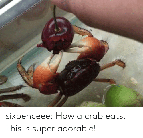Sixpenceee: sixpenceee:  How a crab eats. This is super adorable!