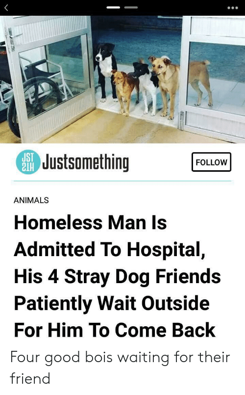 homeless man: SJustsomething  FOLLOW  ANIMALS  Homeless Man Is  Admitted To Hospital,  His 4 Stray Dog Friends  Patiently Wait Outside  For Him To Come Back Four good bois waiting for their friend