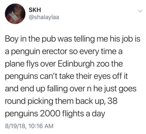 Falling Over: SKH  @shalaylaa  Boy in the pub was telling me his job is  a penguin erector so every time a  plane flys over Edinburgh zoo the  penguins can't take their eyes off it  and end up falling over n he just goes  round picking them back up, 38  penguins 2000 flights a day  8/19/18, 10:16 AM