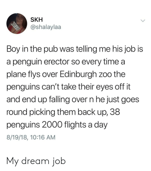 Falling Over: SKH  @shalaylaa  Boy in the pub was telling me his job is  a penguin erector so every time a  plane flys over Edinburgh zoo the  penguins can't take their eyes off it  and end up falling over n he just goes  round picking them back up, 38  penguins 2000 flights a day  8/19/18, 10:16 AM My dream job