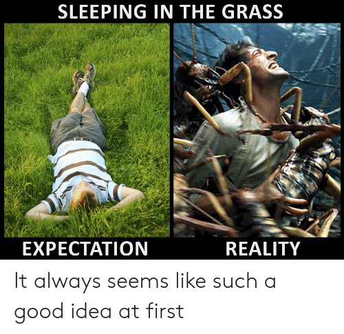 Expectation Reality: SLEEPING IN THE GRASS  EXPECTATION  REALITY It always seems like such a good idea at first