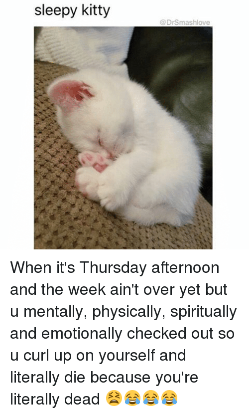 physicality: sleepy kitty  DrSmashlove When it's Thursday afternoon and the week ain't over yet but u mentally, physically, spiritually and emotionally checked out so u curl up on yourself and literally die because you're literally dead 😫😂😂😂
