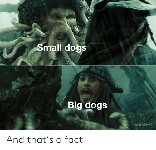 Dogs, Big, and Fact: Small dogs  Big dogs  u/slim2297 And that's a fact