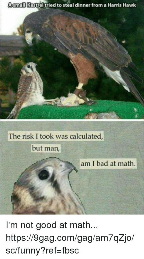 But Man Am I Bad At Math: small Kestrel tried to steal dinner from a Harris Hawk  The risk I took was calculated  but man  am I bad at math I'm not good at math... https://9gag.com/gag/am7qZjo/sc/funny?ref=fbsc