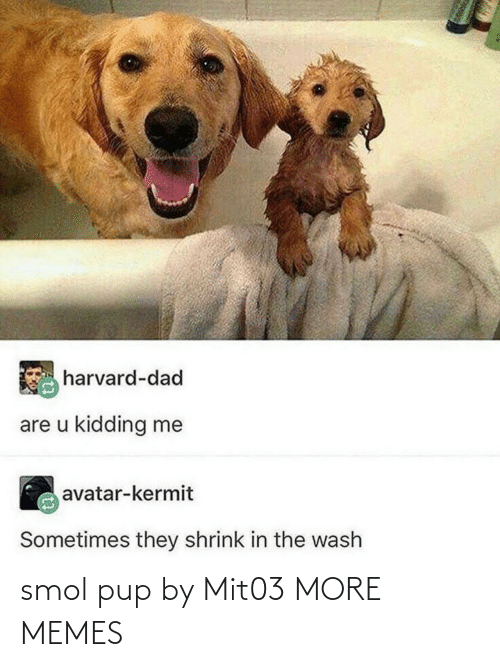 PUP: smol pup by Mit03 MORE MEMES