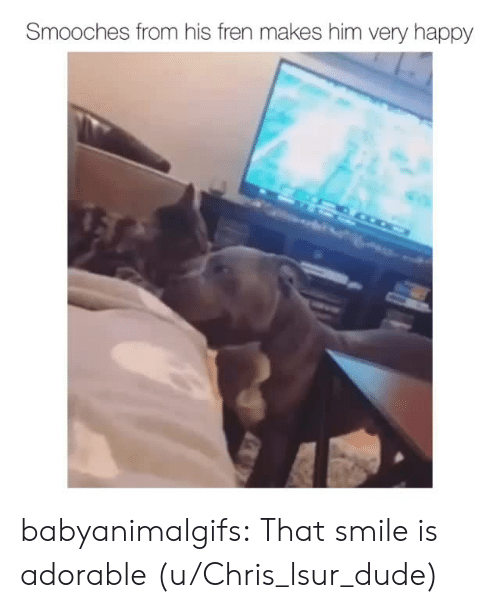 Dude, Tumblr, and Blog: Smooches from his fren makes him very happy babyanimalgifs:  That smile is adorable(u/Chris_lsur_dude)