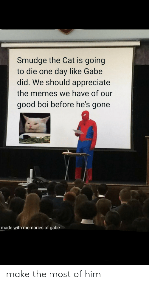 going-to-die: Smudge the Cat is going  to die one day like Gabe  did. We should appreciate  the memes we have of our  good boi before he's gone  made with memories of gabe make the most of him