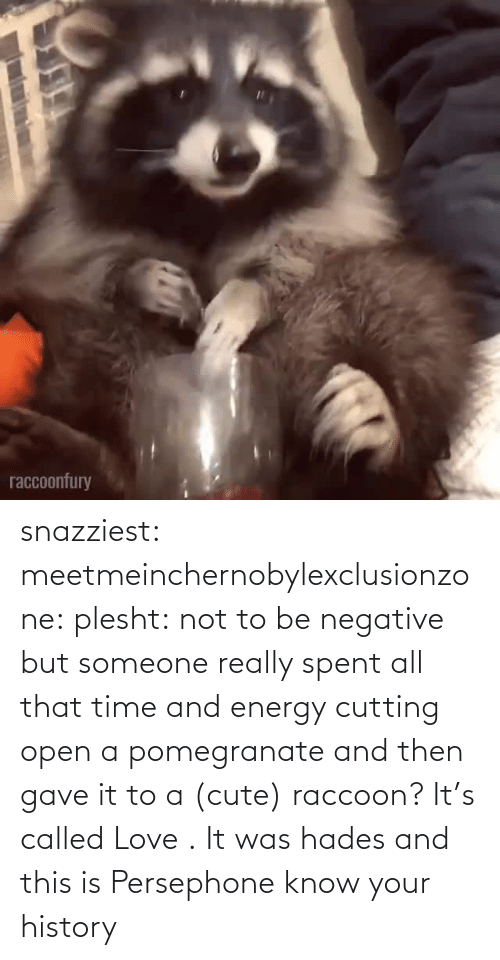 A Href: snazziest:  meetmeinchernobylexclusionzone:  plesht: not to be negative but someone really spent all that time and energy cutting open a pomegranate and then gave it to a (cute) raccoon? It's called Love .   It was hades and this is Persephone know your history