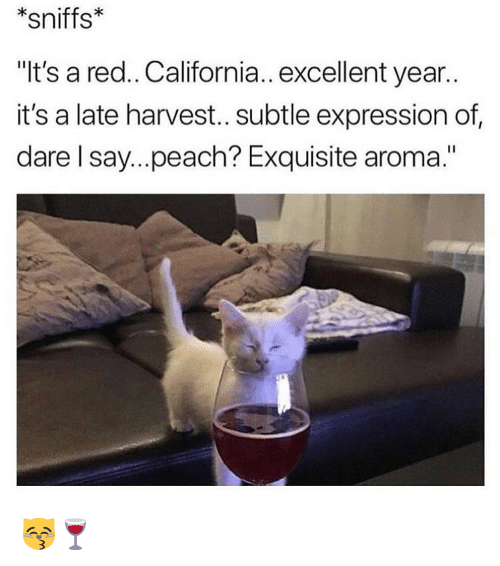 "aroma: *sniffs*  ""It's a red.. California.. excellent year.  it's a late harvest.. subtle expression of  dare l say...peach? Exquisite aroma."" 😽🍷"