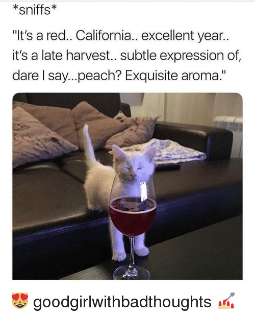 """Memes, California, and 🤖: sniffs  """"It's a red.. California.. excellent year..  it's a late harvest.. subtle expression of  dare I say...peach? Exquisite aroma."""" 😻 goodgirlwithbadthoughts 💅🏼"""