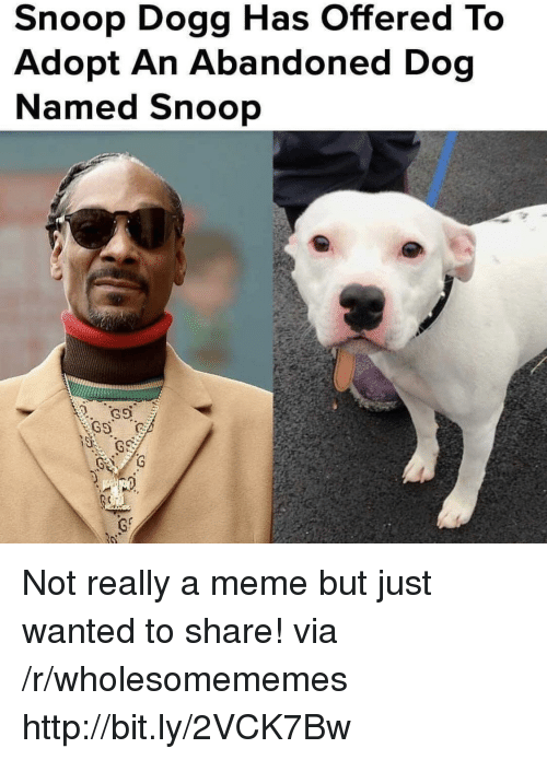Meme, Snoop, and Snoop Dogg: Snoop Dogg Has Offered To  Adopt An Abandoned Dog  Named Snoop Not really a meme but just wanted to share! via /r/wholesomememes http://bit.ly/2VCK7Bw