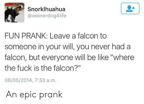 """Fun Prank: Snorklhuahua  @weinerdog4life  FUN PRANK: Leave a falcon to  someone in your will, you never had a  falcon, but everyone will be like """"where  the fuck is the falcon?""""  08/05/2014, 7:33 a.m. An epic prank"""