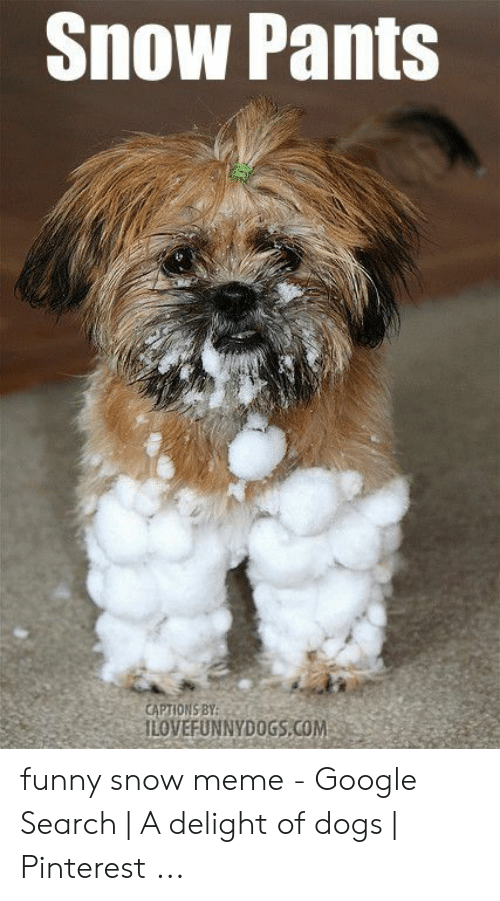 Funny Snow Meme: Snow Pants  CAPTIONS BY funny snow meme - Google Search | A delight of dogs | Pinterest ...