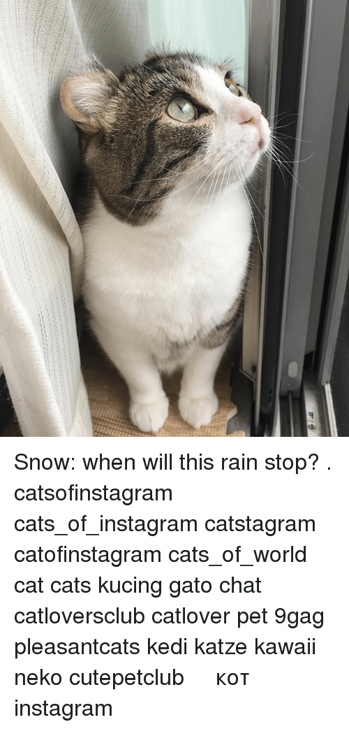 9gag, Cats, and Instagram: Snow: when will this rain stop? . catsofinstagram cats_of_instagram catstagram catofinstagram cats_of_world cat cats kucing gato chat catloversclub catlover pet 9gag pleasantcats kedi katze kawaii neko cutepetclub 고양이 кот แมว 猫 instagram