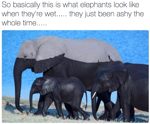 the whole time: So basically this is what elephants look like  when they're wet..... they just been ashy the  whole time.....