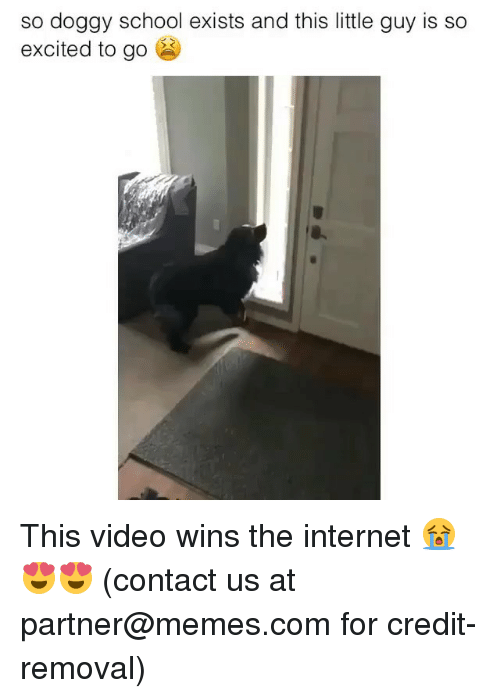 Internet, Memes, and School: so doggy school exists and this little guy is so  excited to go This video wins the internet 😭😍😍 (contact us at partner@memes.com for credit-removal)