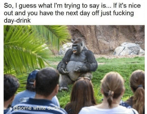 Dank, Dude, and Guess: So, I guess what I'm trying to say is... If it's nice  out and you have the next day off just fucking  day-drink  @some white dude