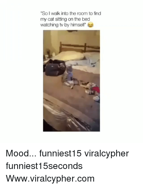 """Funny, Mood, and Cat: So I walk into the room to find  my cat sitting on the bed  watching tv by himself"""" Mood... funniest15 viralcypher funniest15seconds Www.viralcypher.com"""