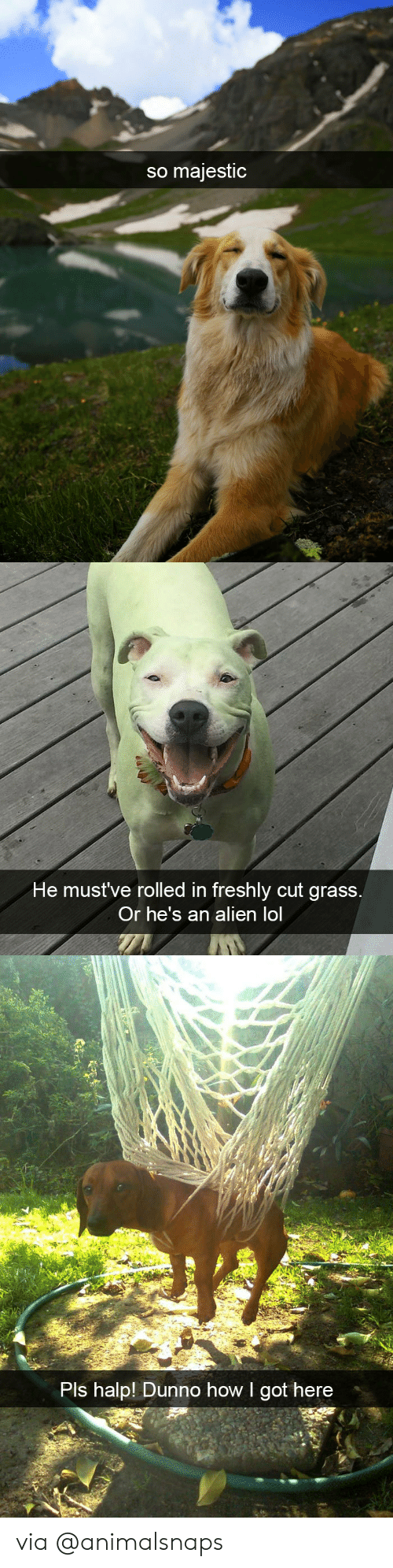 Halp: so majestic   ni  He mustve rolled in freshly cut grass  Or he's an alien lol   Pls halp! Dunno how I got here via @animalsnaps