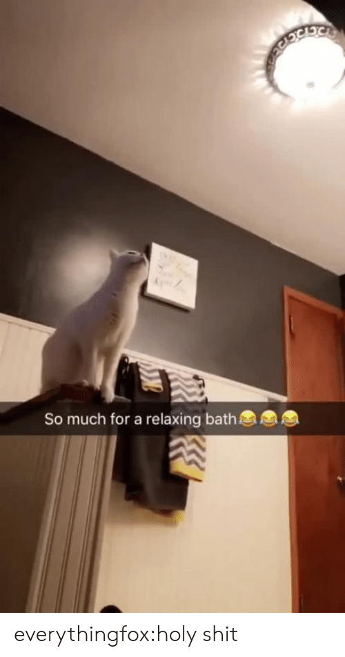 Shit, Tumblr, and Blog: So much for a relaxing bath everythingfox:holy shit