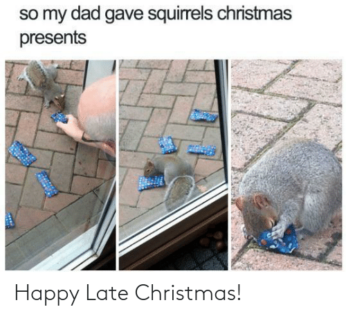 Christmas: so my dad gave squirrels christmas  presents Happy Late Christmas!