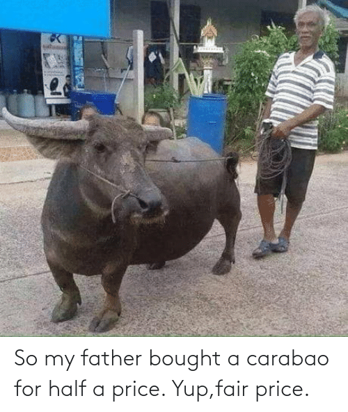 Half: So my father bought a carabao for half a price. Yup,fair price.