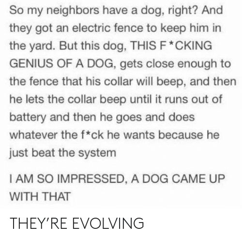 Genius, Neighbors, and Got: So my neighbors have a dog, right? And  they got an electric fence to keep him in  the yard. But this dog, THIS F* CKING  GENIUS OF A DOG, gets close enough to  the fence that his collar will beep, and then  he lets the collar beep until it runs out of  battery and then he goes and does  whatever the f*ck he wants because he  just beat the system  I AM SO IMPRESSED, A DOG CAME UP  WITH THAT THEY'RE EVOLVING