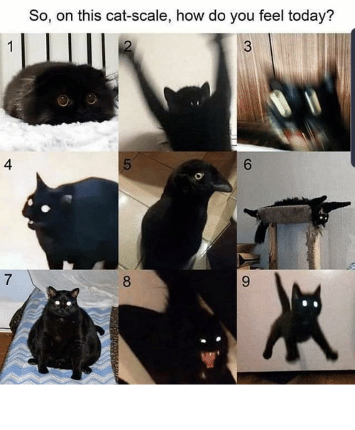 How Do: So, on this cat-scale, how do you feel today?  4  6.  8. ⠀ ⠀ ⠀ ⠀ ⠀ ⠀ ⠀ ⠀ ⠀